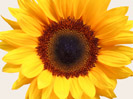No customs duty on the import of 20,000 tones of sunflower seed oil till 06.04.2013
